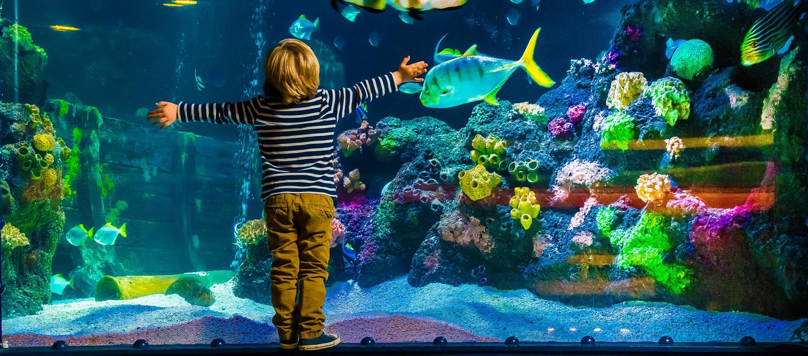 Junge im Sea Life